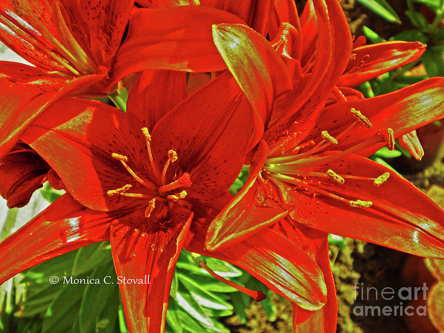 Red Flowers No. R24 by Monica C Stovall