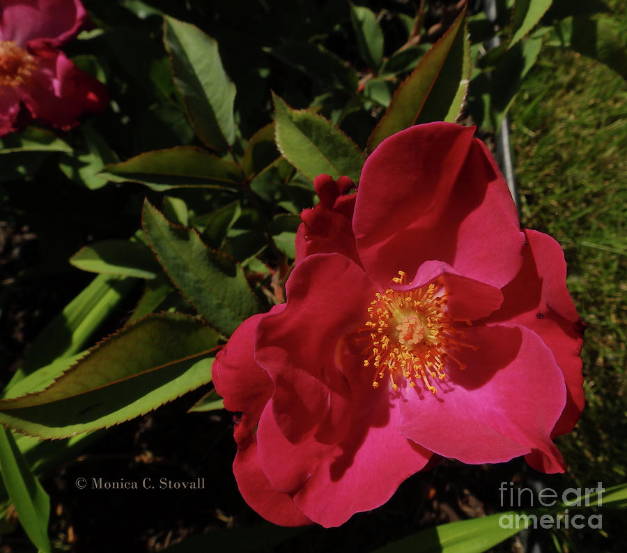 Red Flowers No. R28 by Monica C Stovall