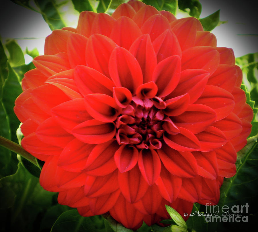 Red Flowers No. R3 by Monica C Stovall