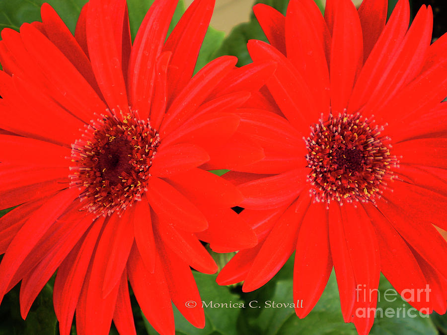 Red Flowers No. R5 by Monica C Stovall