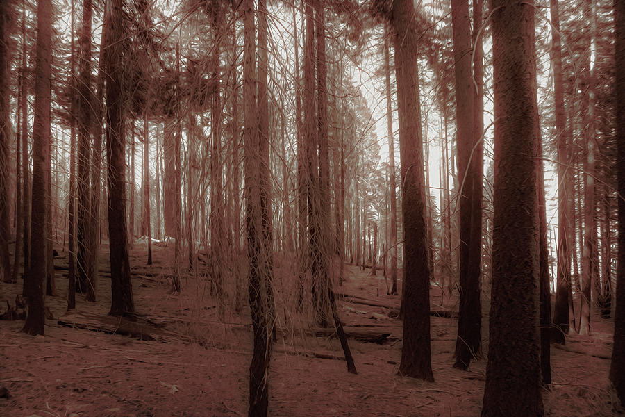 Redwood Photograph - Red Forest by Alina Avanesian