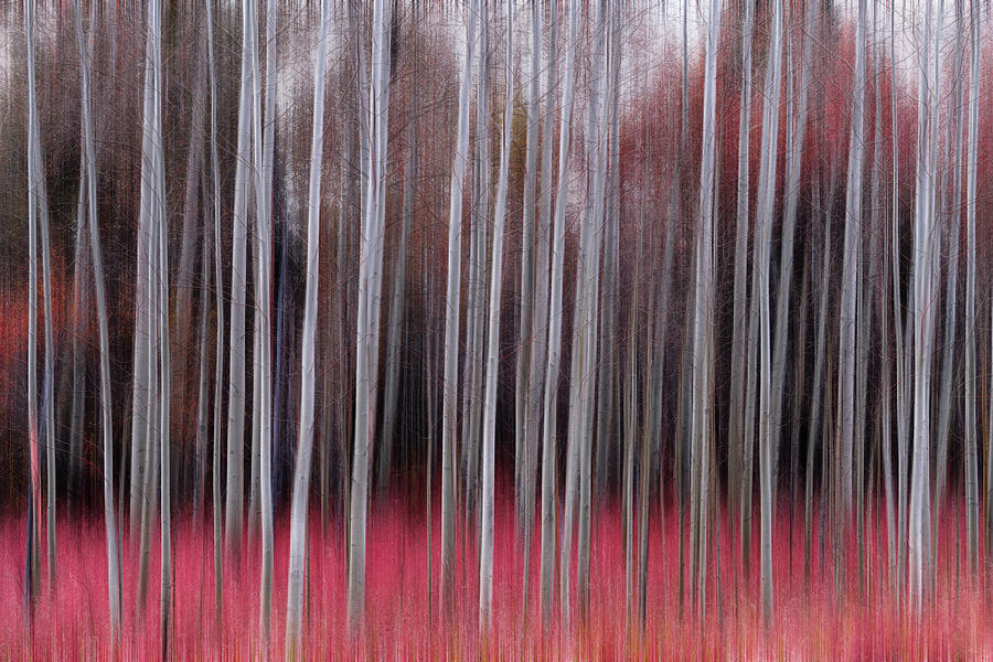Red Forest In Motion by James BO Insogna