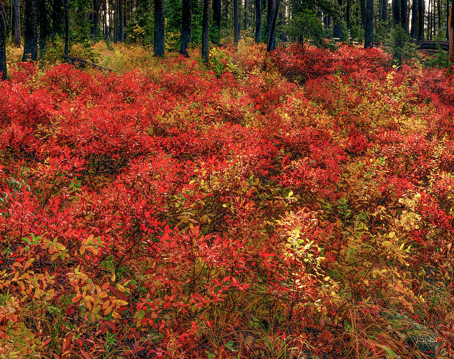 Autumn Photograph - Red Forest Light by Leland D Howard