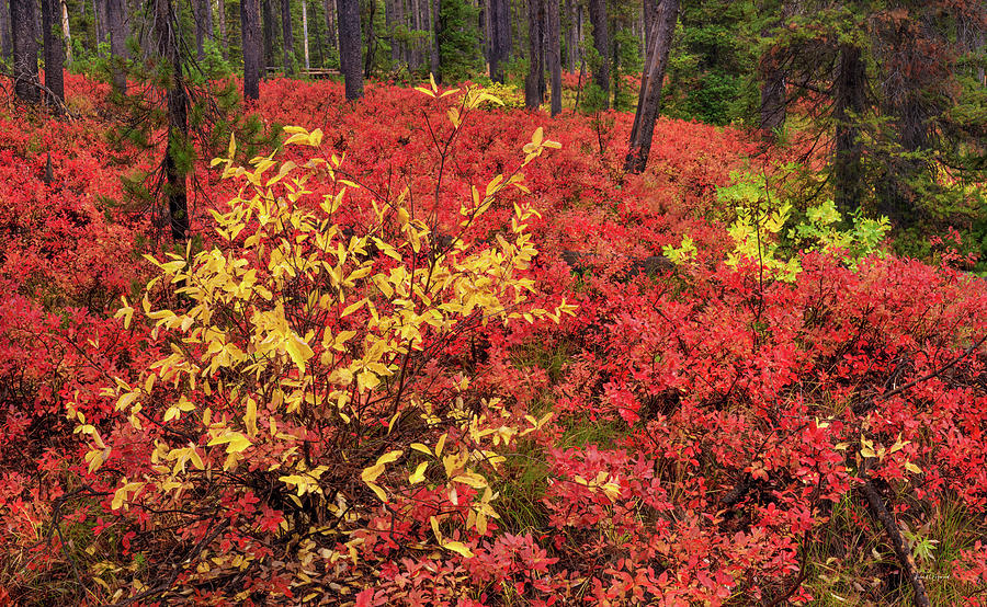 Autumn Photograph - Red Forest Panoramic by Leland D Howard