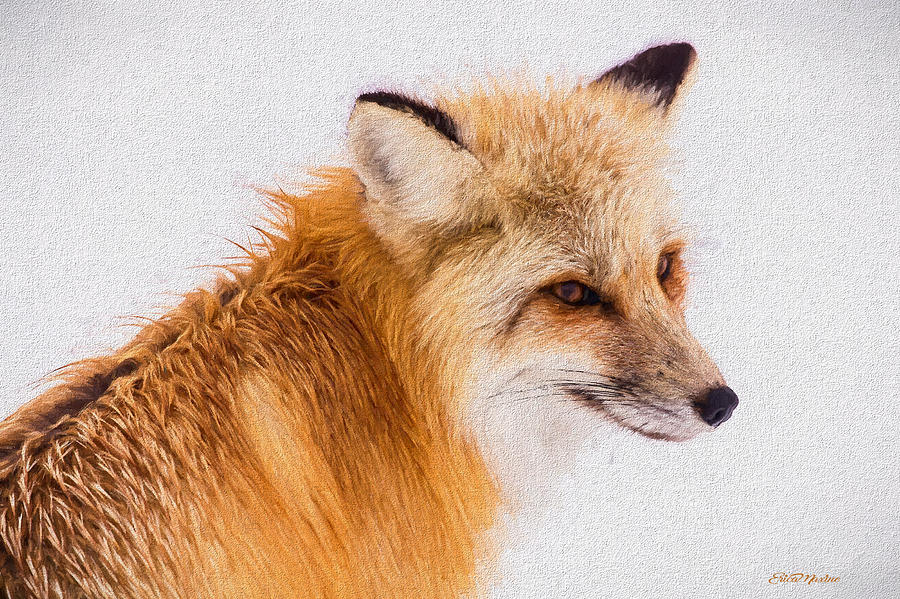 Red Fox 731 - Painted by Ericamaxine Price