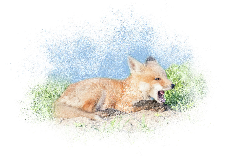 Red Fox Kit #10 - Calling by Patti Deters