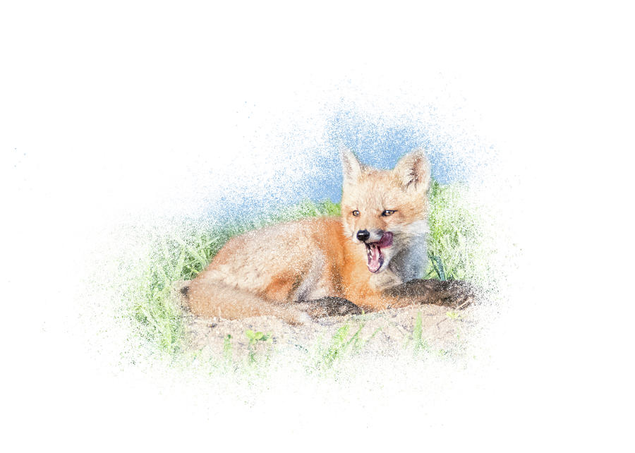 Red Fox Kit #11 - Yawn by Patti Deters