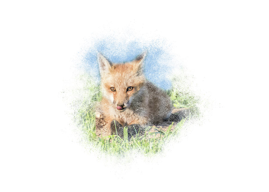 Red Fox Kit #12 - Ready for Dinner by Patti Deters