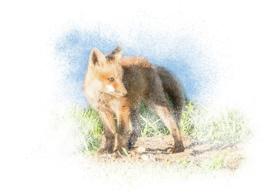 Red Fox Kit #14 - Ready to Run by Patti Deters