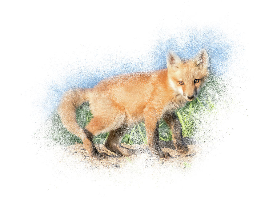 Red Fox Kit #7 - Pause by Patti Deters