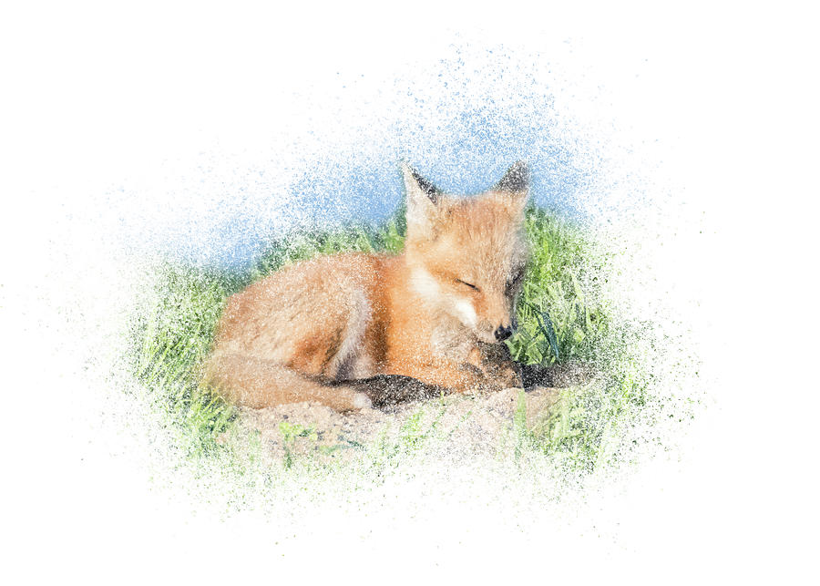 Red Fox Kit #9 - Quick Nap by Patti Deters