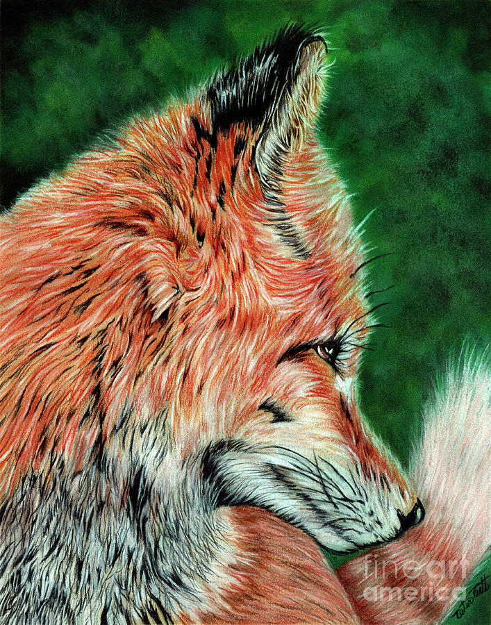 Red Fox Painting - Red Fox by Peter Piatt