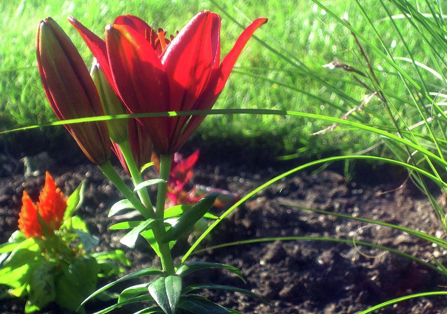 Red Garden Flowers by Jaeda DeWalt