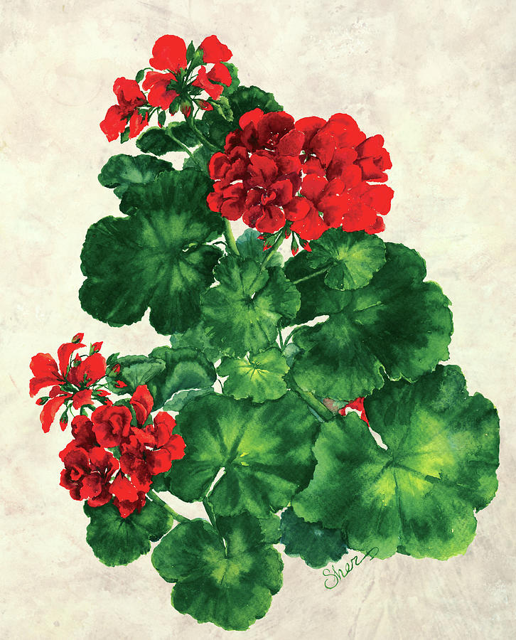 Red Geranium Mixed Media - Red Geranium by Sher Sester