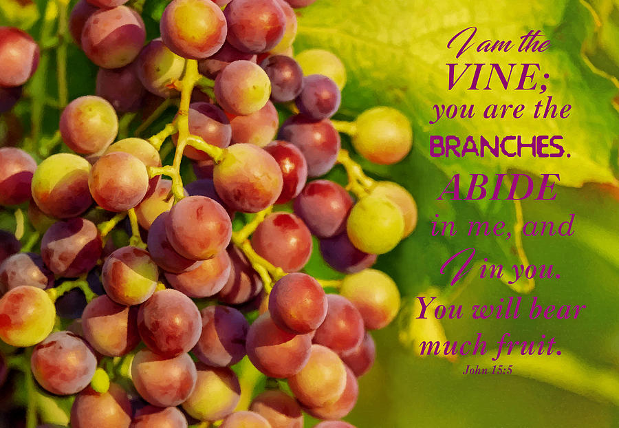 Red Grapes Ripening With Scripture by Sandi OReilly