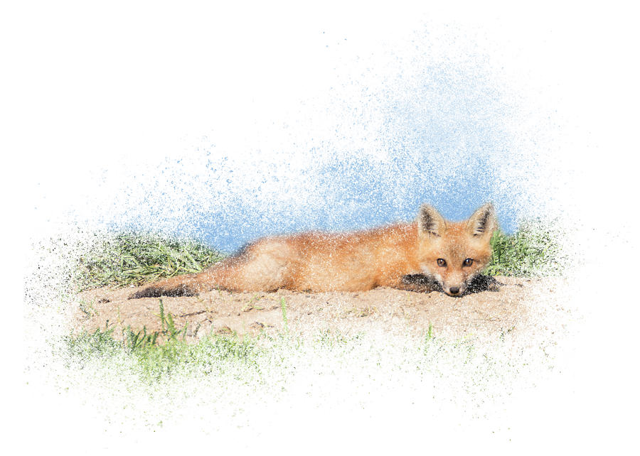 Red Kit Fox #15 - Relaxing on Tummy by Patti Deters