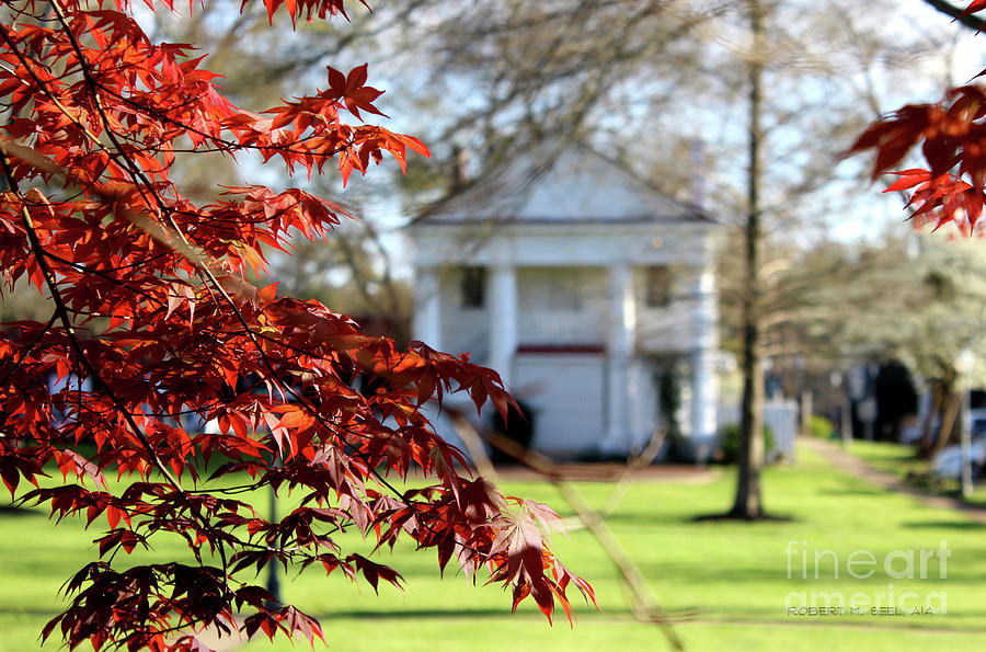 Red Leaves on the Green 2 by Robert M Seel