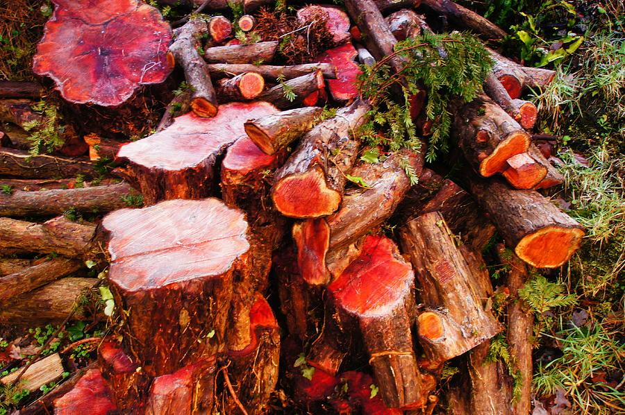 Brodie Photograph - Red Logs by Nik Watt
