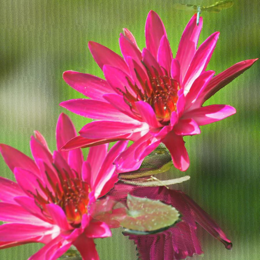 Red Lotus Digital Painting by Gene Norris