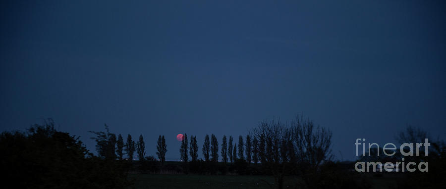 Red Moon photo 3 by Jenny Potter