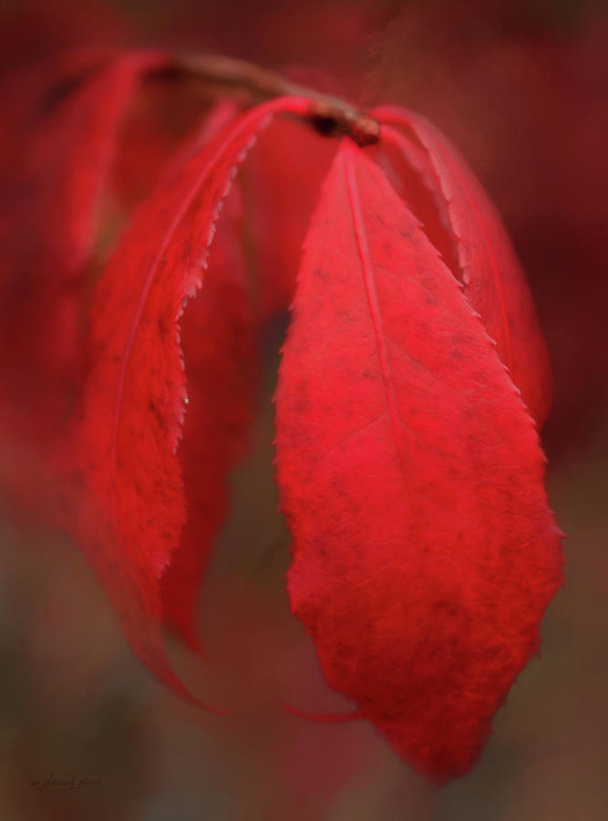 Red October by Joanna Kovalcsik