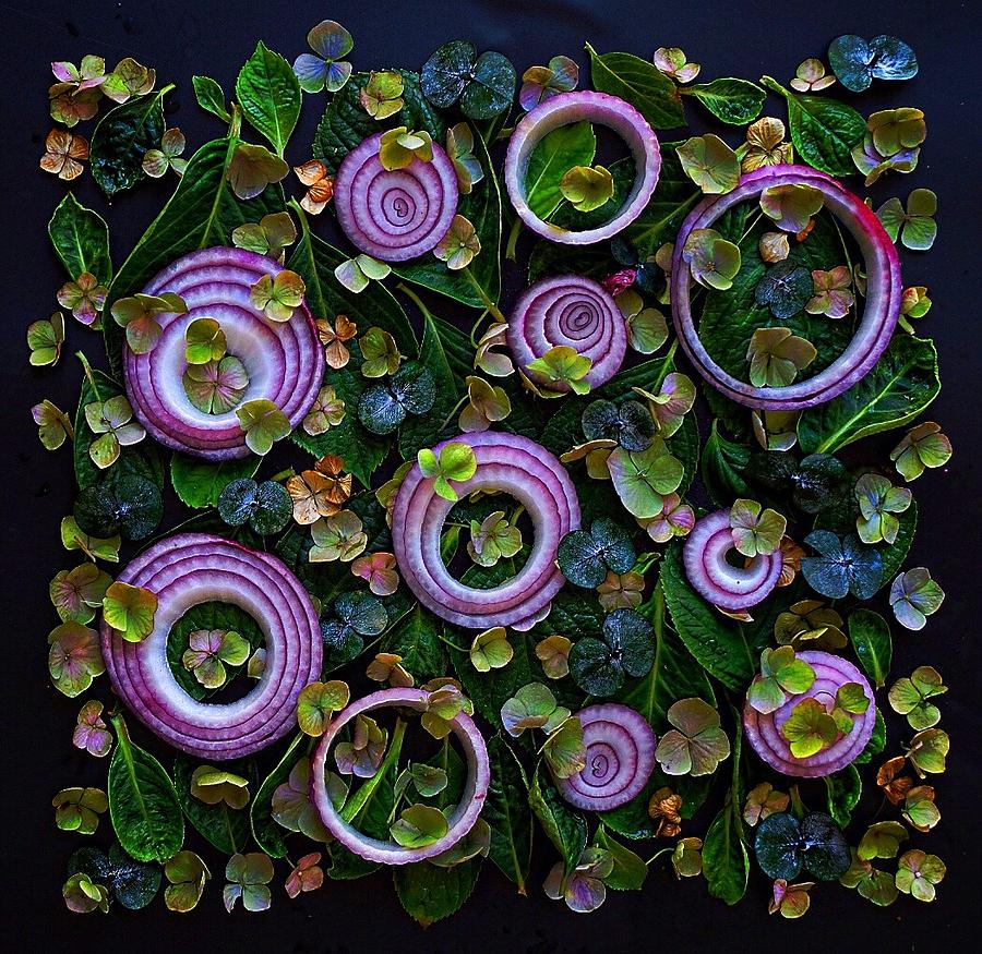 Red Onion Garden by Sarah Phillips