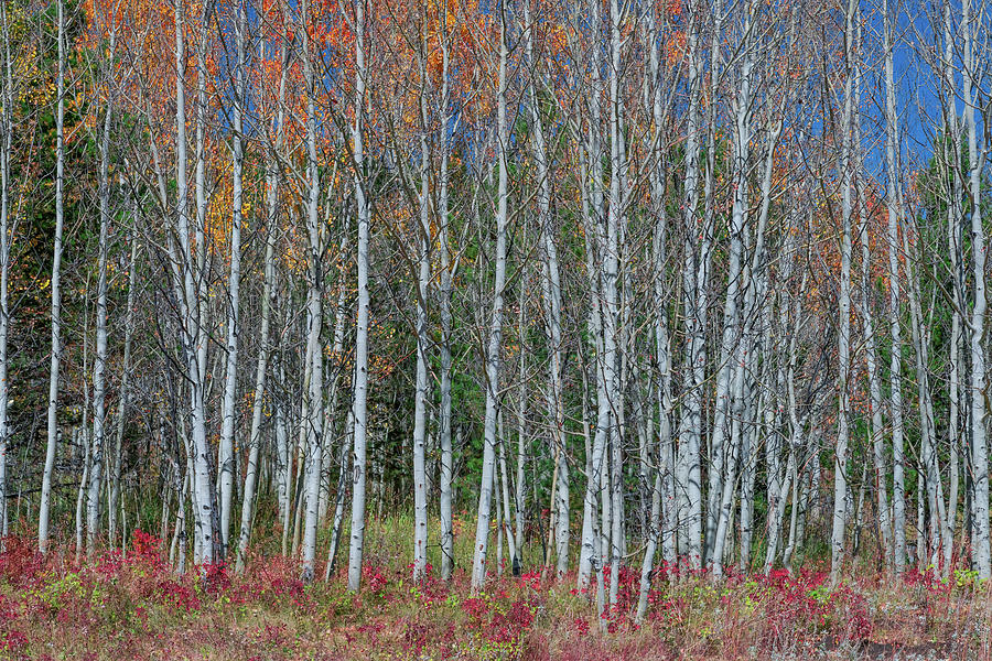 Red Orange Blue Stick Forest Photograph