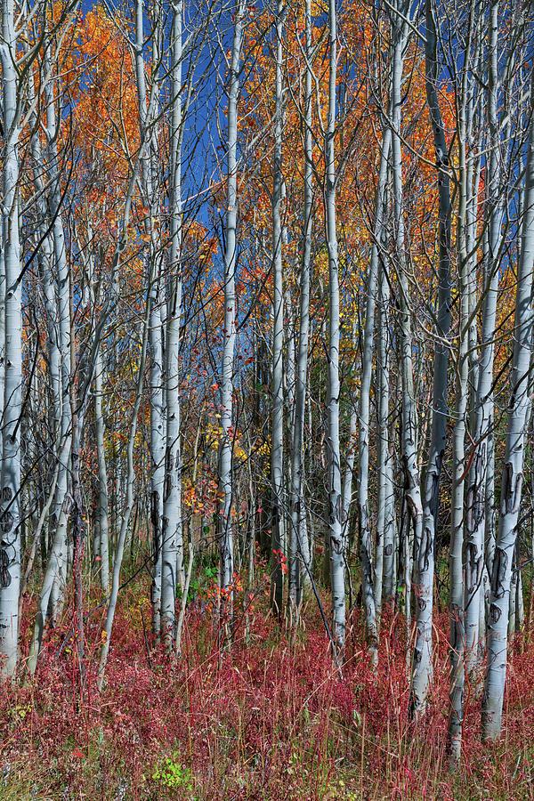 Red Orange Blue Stick Forest Portrait by James BO Insogna