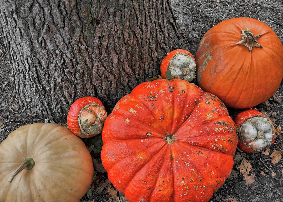 Pumpkin Photograph - Red Orange by JAMART Photography