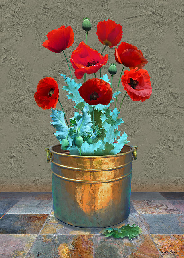 Flowers Digital Art - Red Patio Poppies by M Spadecaller