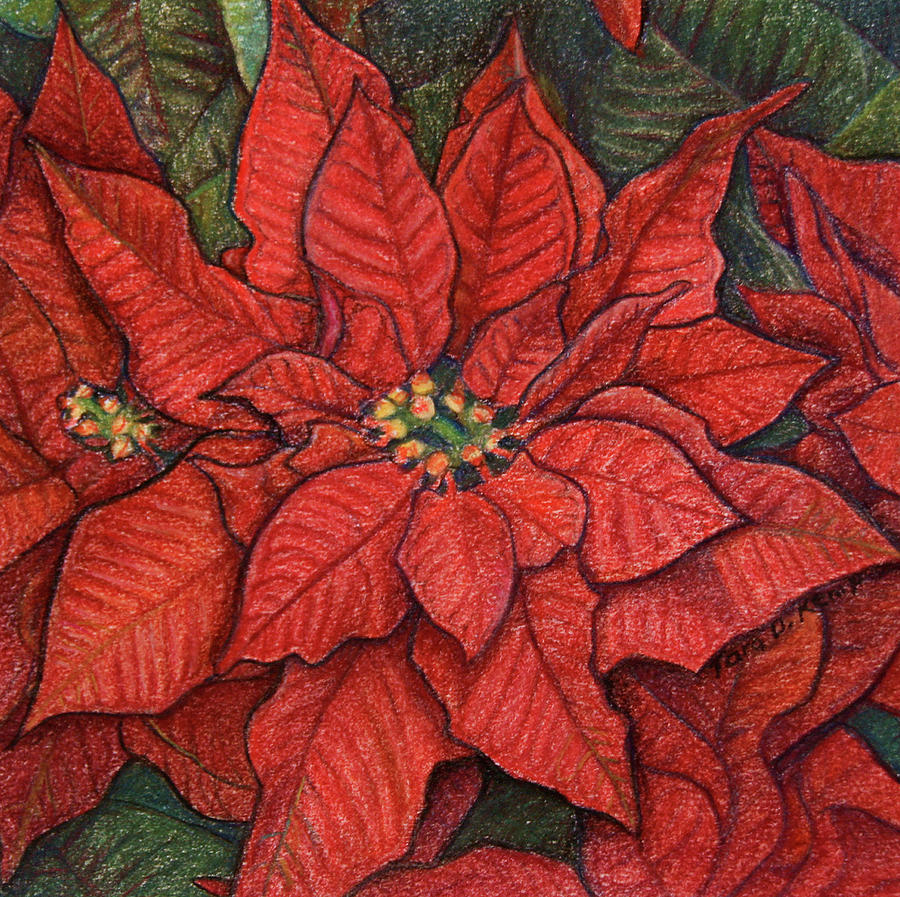 Red Poinsettia by Tara D Kemp