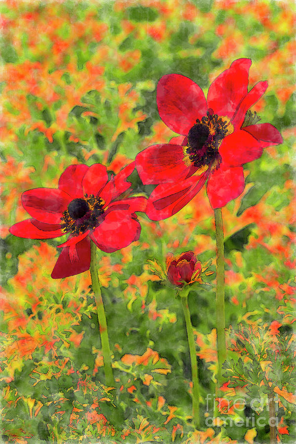 Red Poppy Anemones by Tanya C Smith