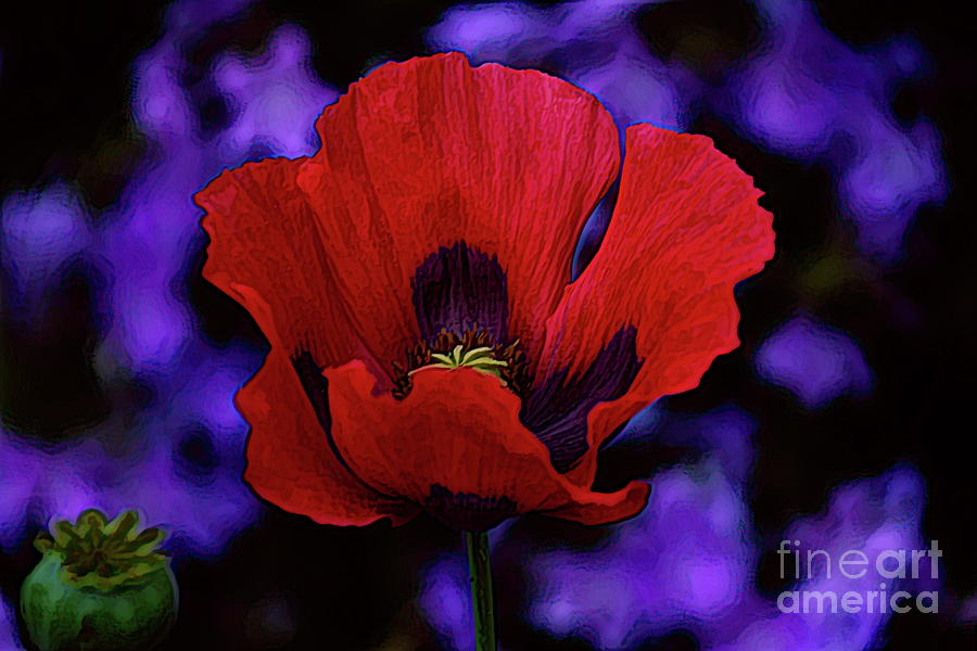 Red Poppy Brilliance by Diana Mary Sharpton