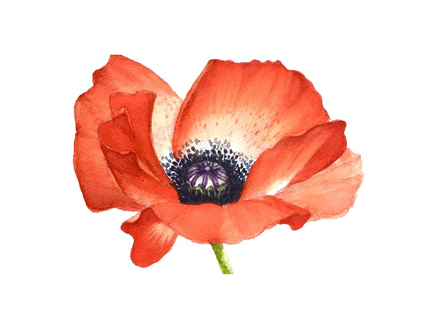 Red Poppy Flower Image For Prints On Tshirt Painting By Mahsa