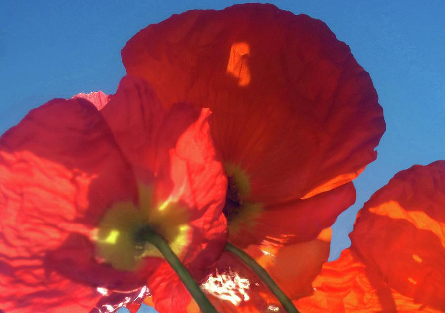 Red Poppy Sky by Jaeda DeWalt