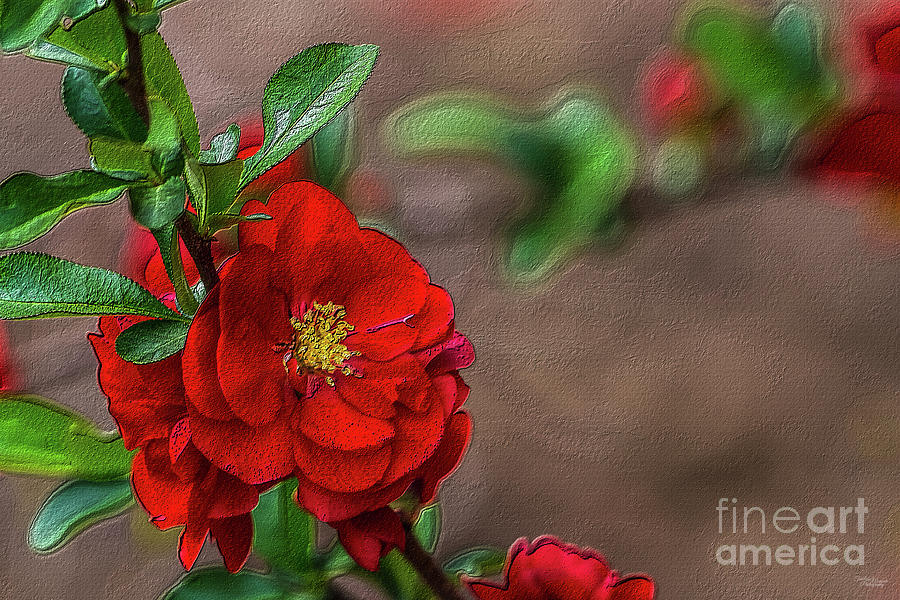 Red Quince Painterly by Jennifer White
