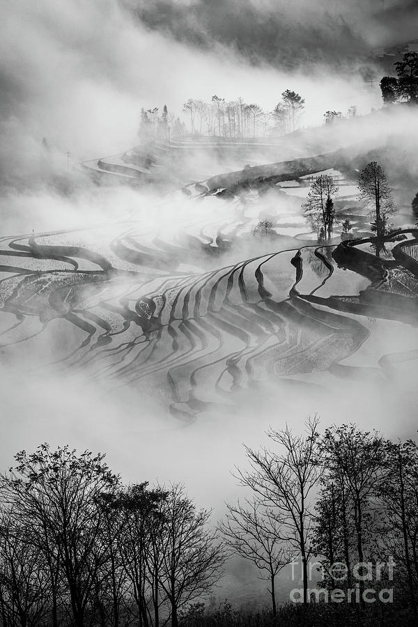 Asia Photograph - Red River Rice Paddies by Inge Johnsson