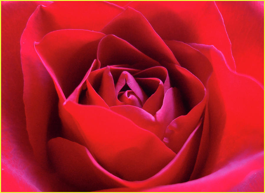 Red Rose Photograph - Red Rose 3 by Bruce IORIO