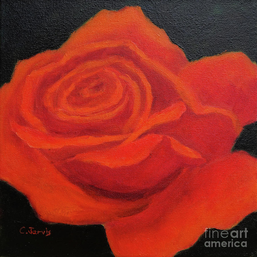 Red Rose Against Black by Carolyn Jarvis