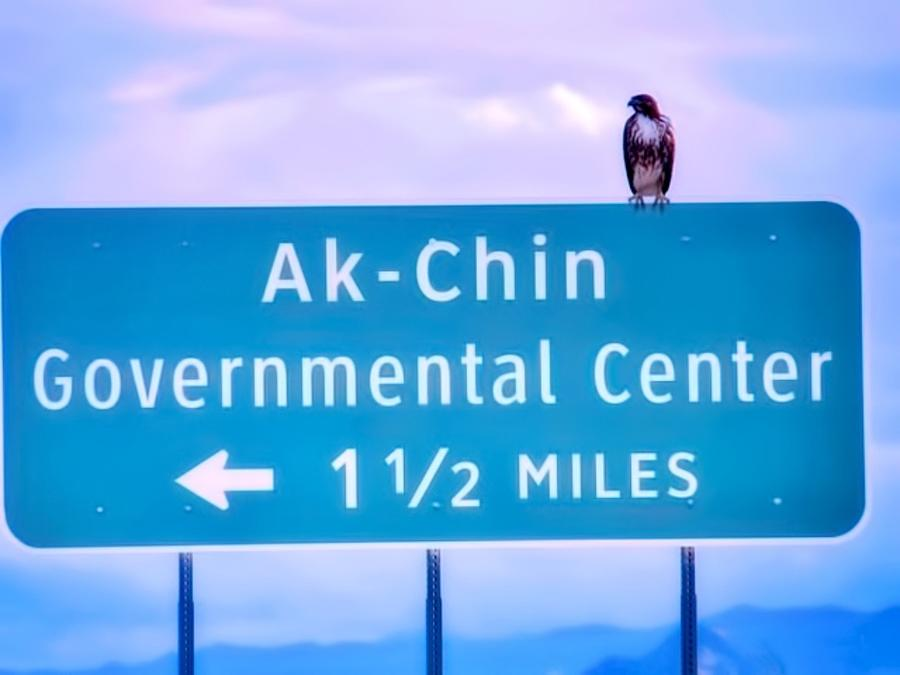 Red-Tailed Hawk on Ak-Chin Indian Sign by Judy Kennedy