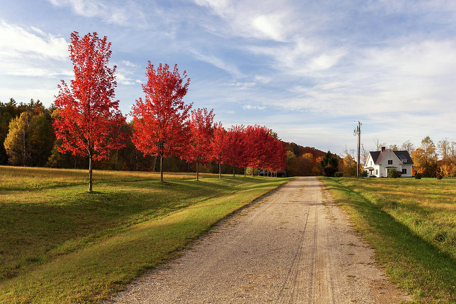 Red Tree Road by Cliff Wassmann