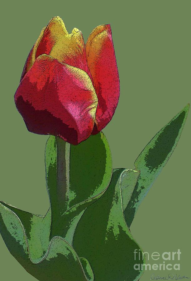 Red Tulip Digital Art - Red Tulip by Deborah Eve Alastra