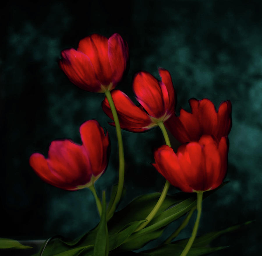Red Tulips Photograph - Red Tulips by Carlla Juffo
