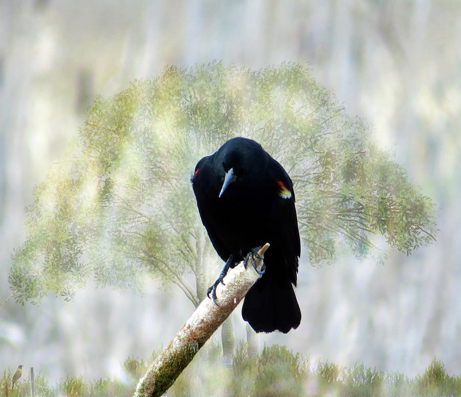 Red Winged Black Bird on a Cattail by Marie Jamieson