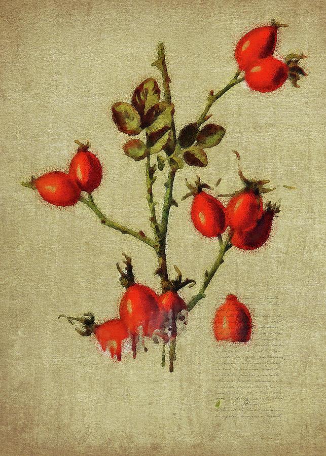 Redcurrant by Jan Keteleer