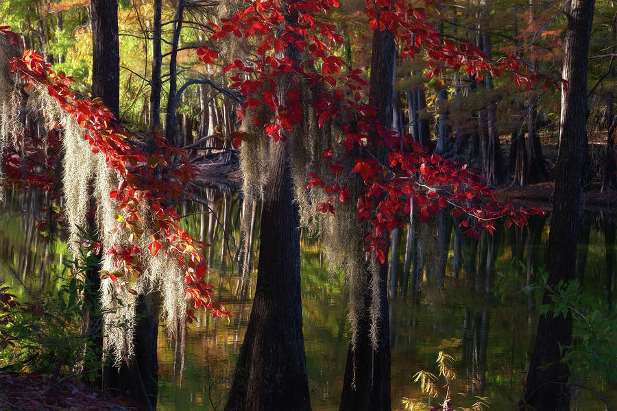 Reds of Autumn by Lana Trussell
