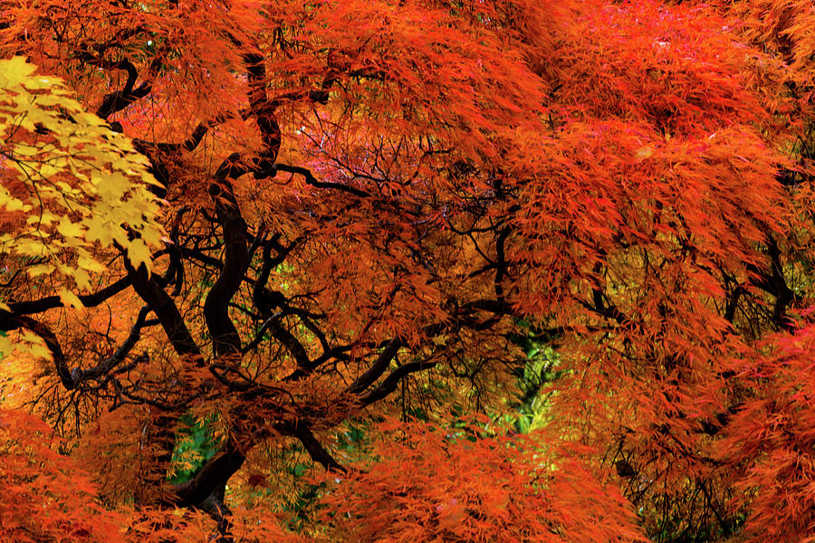 Reds by Stewart Helberg