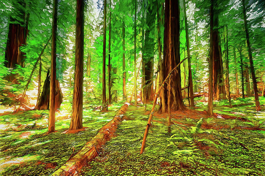 Redwood Trees and Fern Forest FX by Dan Carmichael