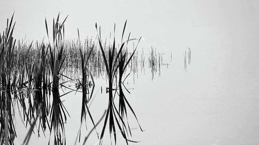 Reed Reflection by Philip Rispin