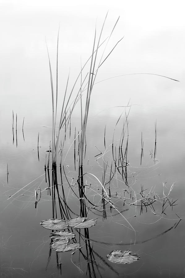 Reeds - Grace and Harmony by Bill Chambers